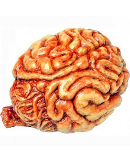 Cervello Umano Pvc